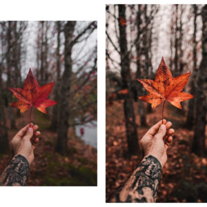 10 Rich and Moody Lightroom Presets 7