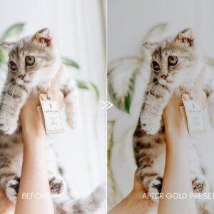 Moody Pet Photography Kit Presets 2
