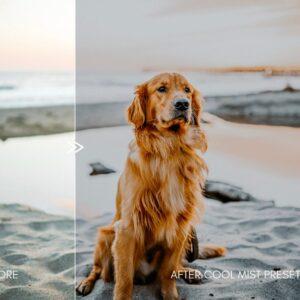 Moody Pet Photography Kit Presets 3
