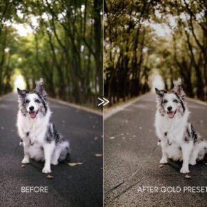 Moody Pet Photography Kit Presets 4