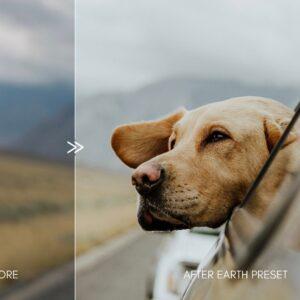 Moody Pet Photography Kit Presets 8